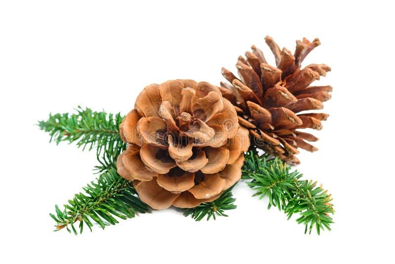 圣诞节与锥体的松树分支 免版税库存照片