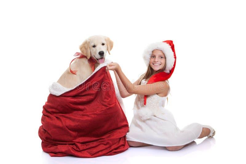 圣诞节假日爱犬礼物 免版税库存照片