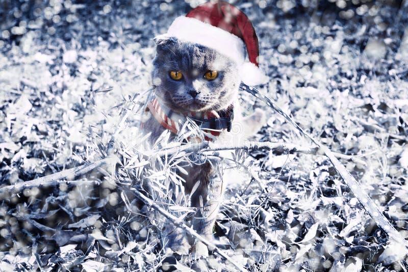 圣诞节全部赌注 图库摄影