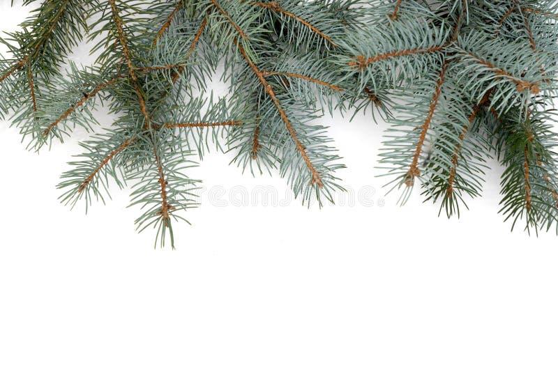 圣诞节冷杉木,在白色被隔绝 库存照片