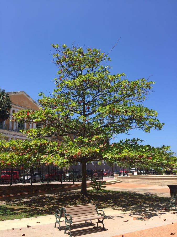 圣诞节加勒比华美的树 免版税库存图片