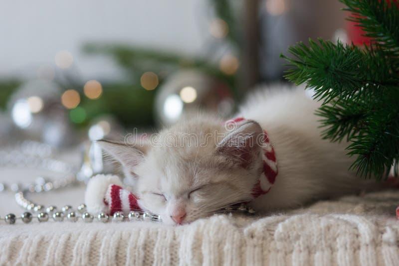 圣诞节动物 一点小猫在圣诞树旁边睡觉 免版税库存照片