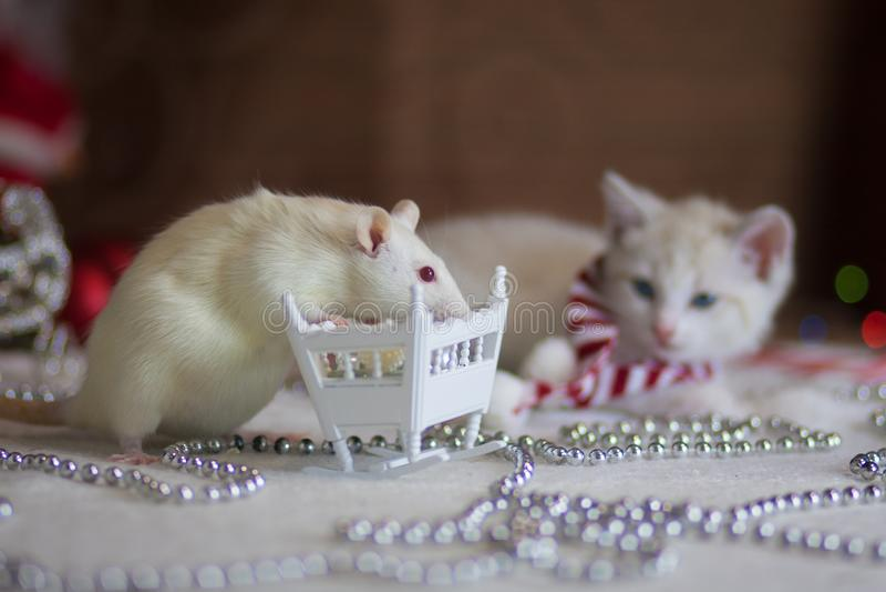 圣诞节动物 与一个小轻便小床的一只白色鼠 免版税库存照片