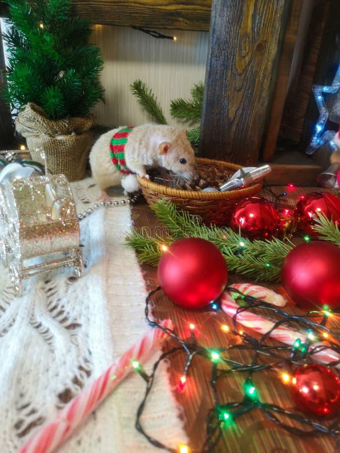 圣诞节动物 与圣诞节玩具的老鼠 免版税库存照片