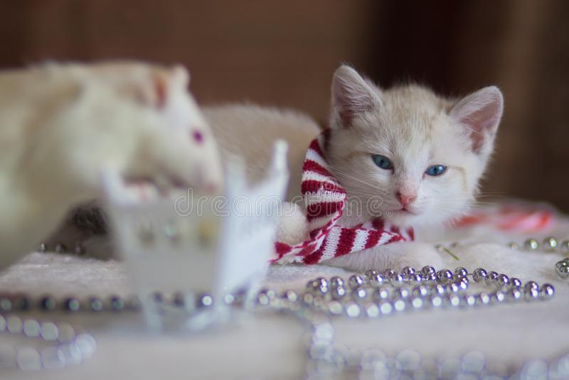圣诞节动物 在圣诞装饰特写镜头的小猫 库存图片