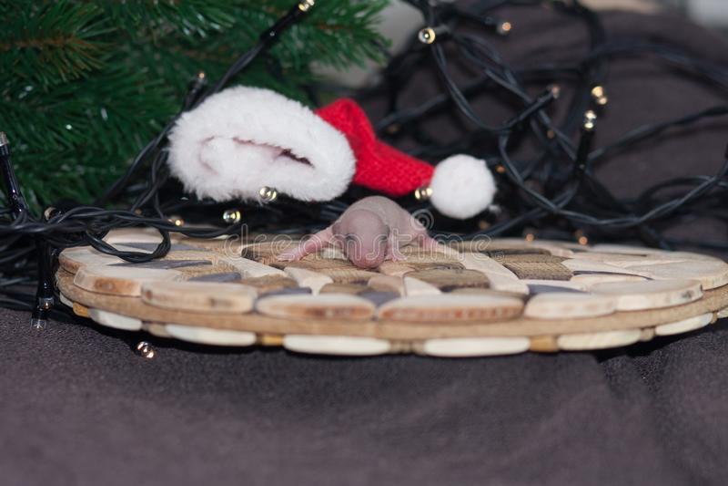 圣诞节动物 在树附近的老鼠婴孩 免版税库存照片
