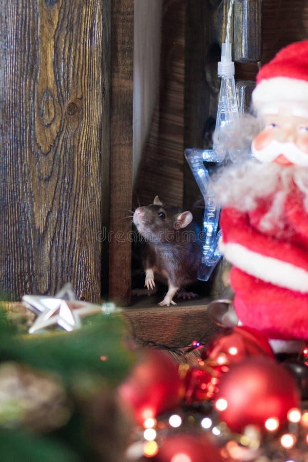 圣诞节动物 新年的鼠标志 免版税图库摄影