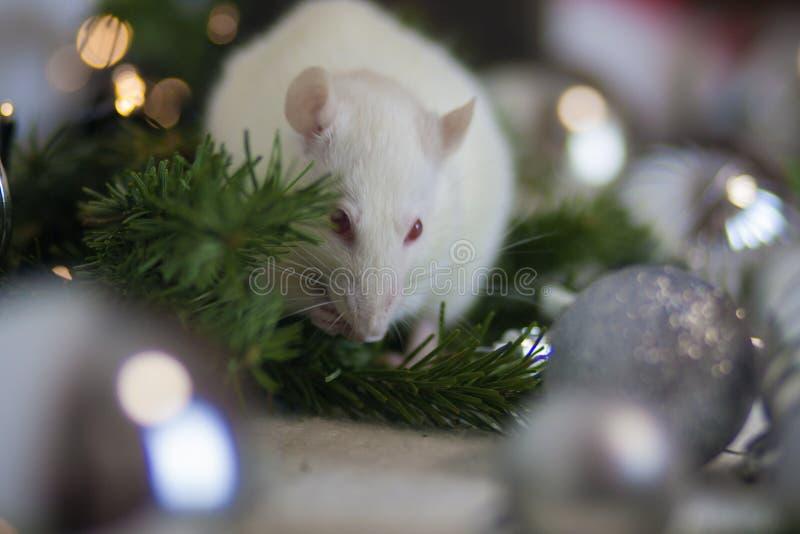 圣诞节动物 鼠咬树 库存照片