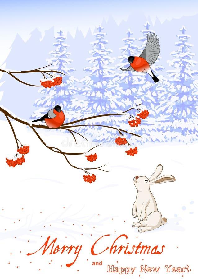 圣诞节和新年与红腹灰雀鸟的贺卡在欧洲花楸分支和白色野兔收集莓果  向量例证