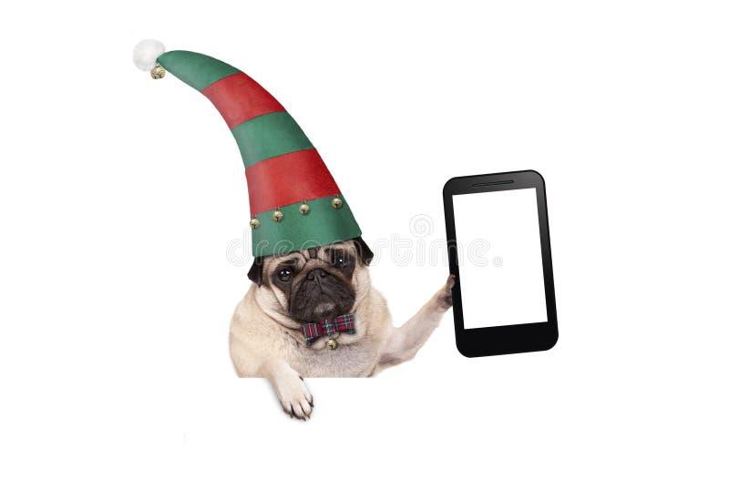 圣诞节哈巴狗与红色和绿色矮子帽子的小狗阻止空白的片剂或手机的,垂悬在白色横幅 库存照片