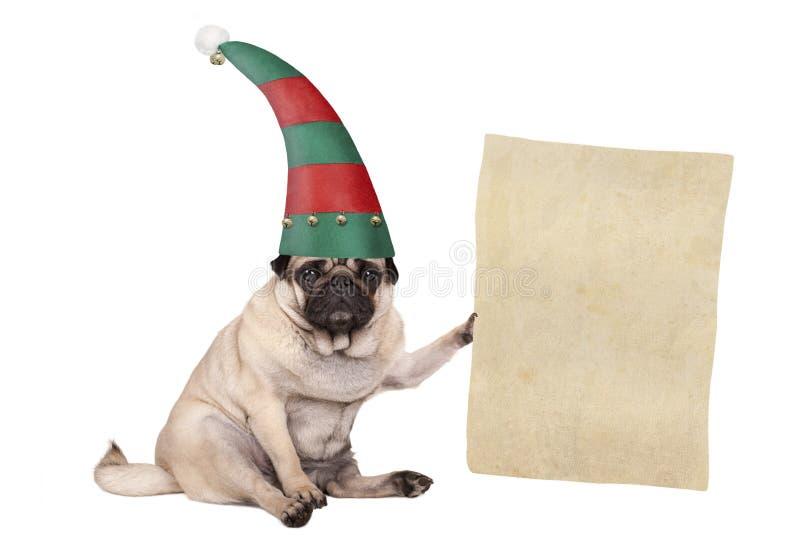 圣诞节哈巴狗坐下的小狗和佩带的矮子帽子,拿着纸纸卷 免版税图库摄影