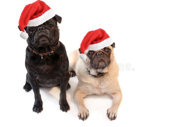 圣诞节哈巴狗 免版税库存图片