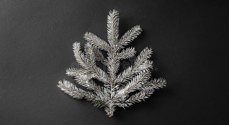 圣诞节在深黑色背景的冷杉分支与雪花 Xmas和新年题材 免版税库存照片
