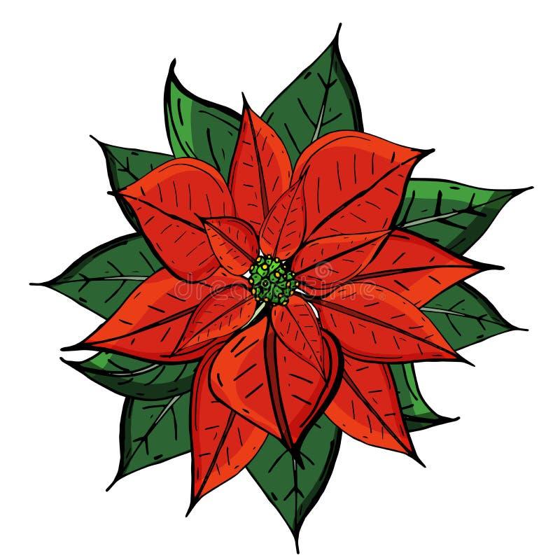 圣诞节在白色背景顶视图隔绝的星花 一品红特写镜头 设计例证股票您使用的向量 库存例证