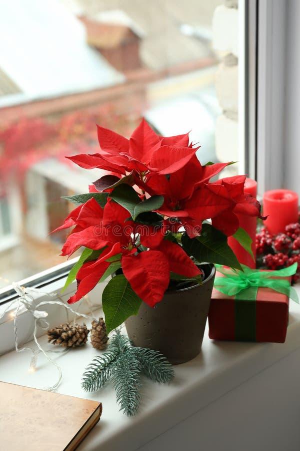圣诞节在窗台的花一品红 免版税库存图片