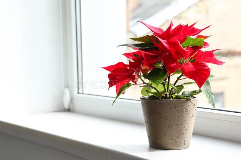 圣诞节在窗台的花一品红 图库摄影
