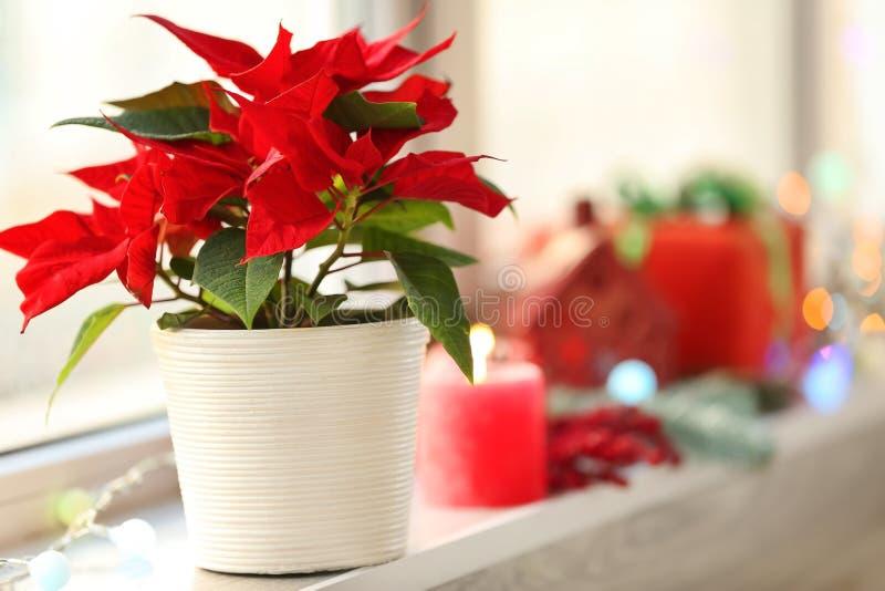 圣诞节在窗台的花一品红 免版税图库摄影