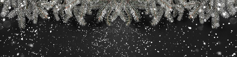 圣诞节在黑暗的背景的冷杉分支 Xmas和新年题材,雪 图库摄影