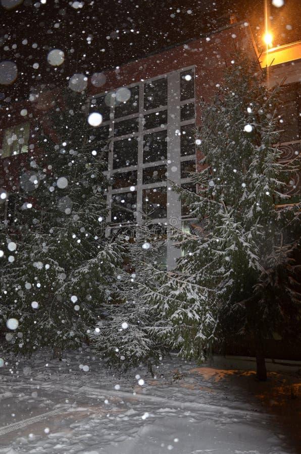 圣诞节城市神仙的拉脱维亚晚上地方上的短期相似的传说 雪落 在大厦附近是云杉 免版税库存图片