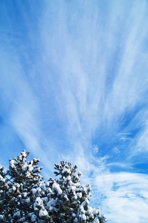 圣诞节天空结构树 免版税库存照片