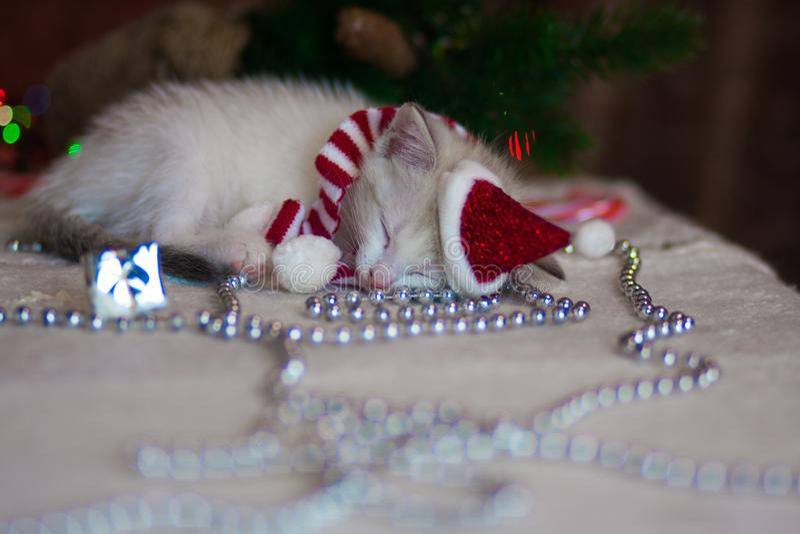 圣诞节奇迹的概念 小猫睡着了 免版税库存照片