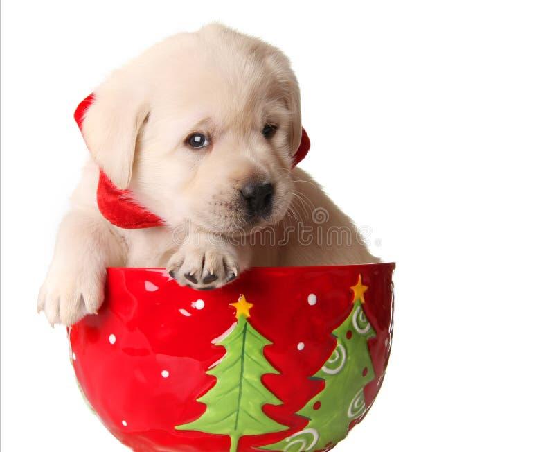 圣诞节小狗 免版税图库摄影