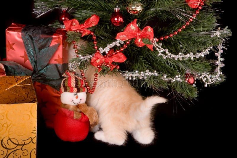 圣诞节尾标 库存图片
