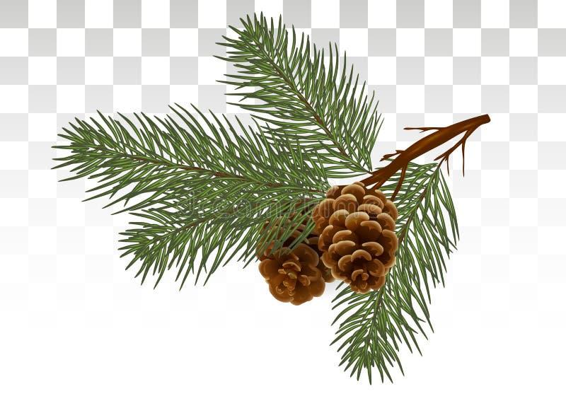 圣诞节杉树分支和锥体 在reali的设计元素 向量例证