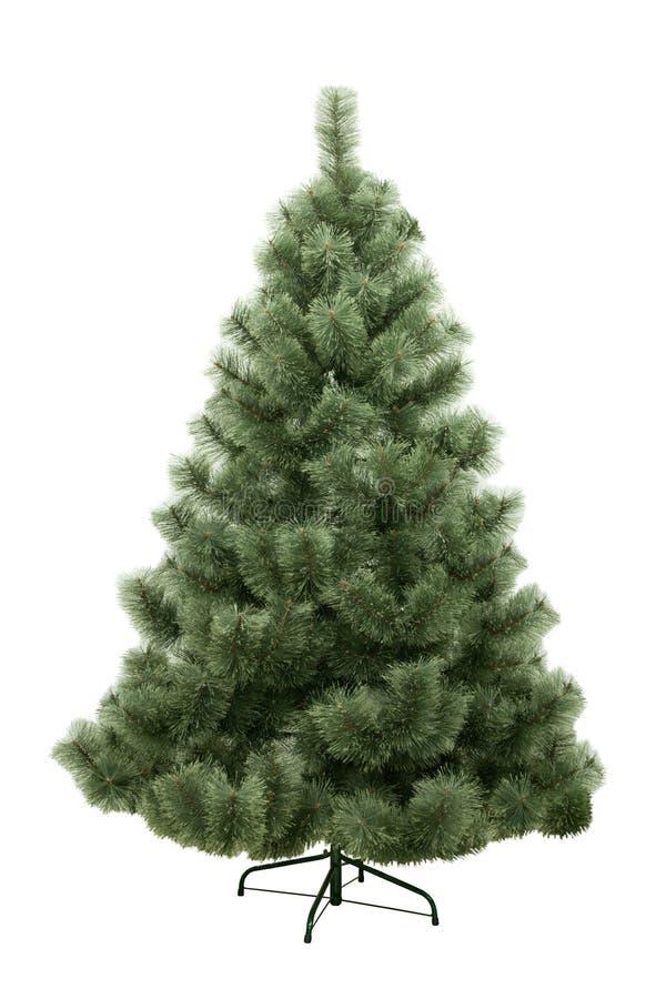 圣诞节查出的杉树 图库摄影