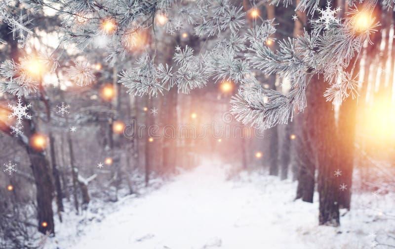 圣诞节森林与光亮的不可思议的雪花的冬天自然 美妙的冬天森林地 另外的背景格式xmas 冷淡的森林 免版税库存图片
