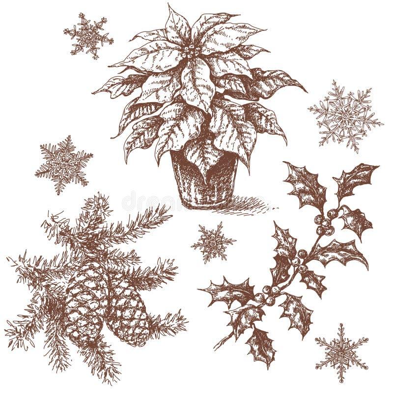 圣诞节植物被设置的剪影 向量例证