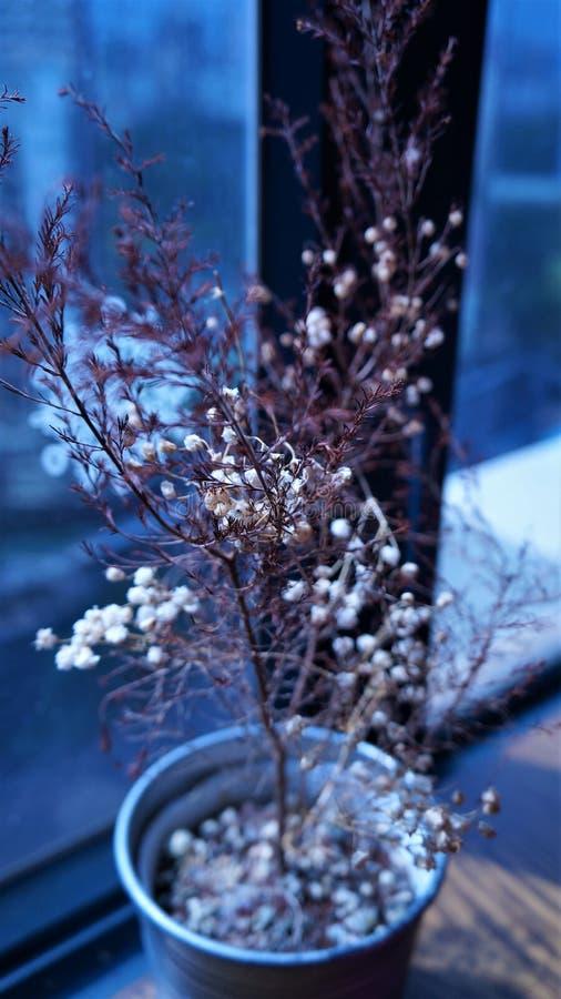 圣诞节植物 库存图片