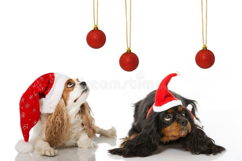 圣诞节狗 免版税库存照片