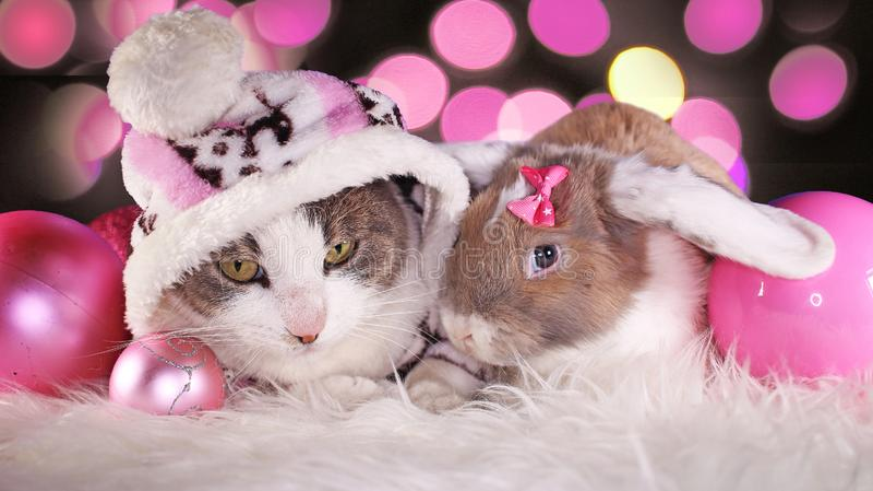 圣诞节猫和兔子一起砍兔宝宝成套工具动物xmas动物猫逗人喜爱的桃红色装饰 免版税库存图片