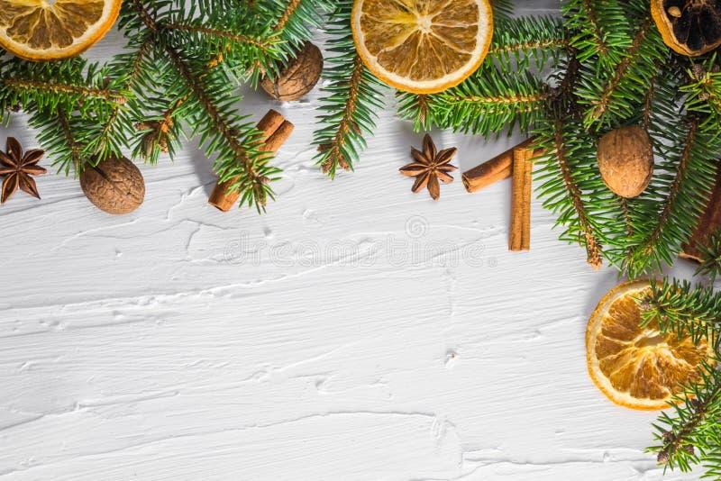 圣诞节白色背景新鲜的枝杈针叶树树烘干了柑橘 库存照片