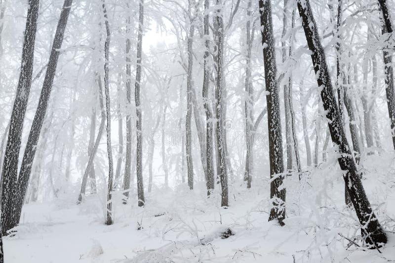 圣诞节神奇冬天多雪的森林 免版税库存图片