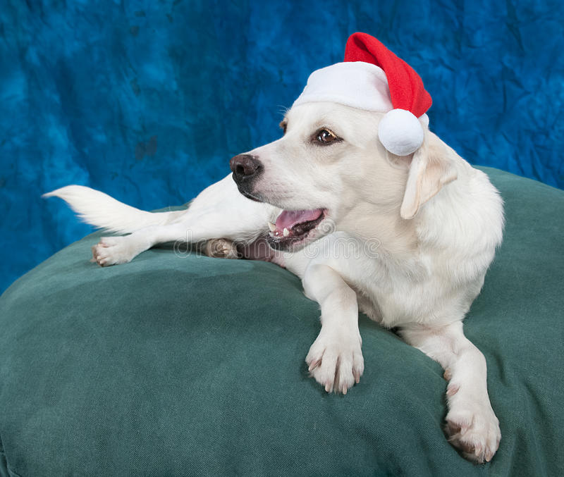 圣诞节肯定 免版税库存图片