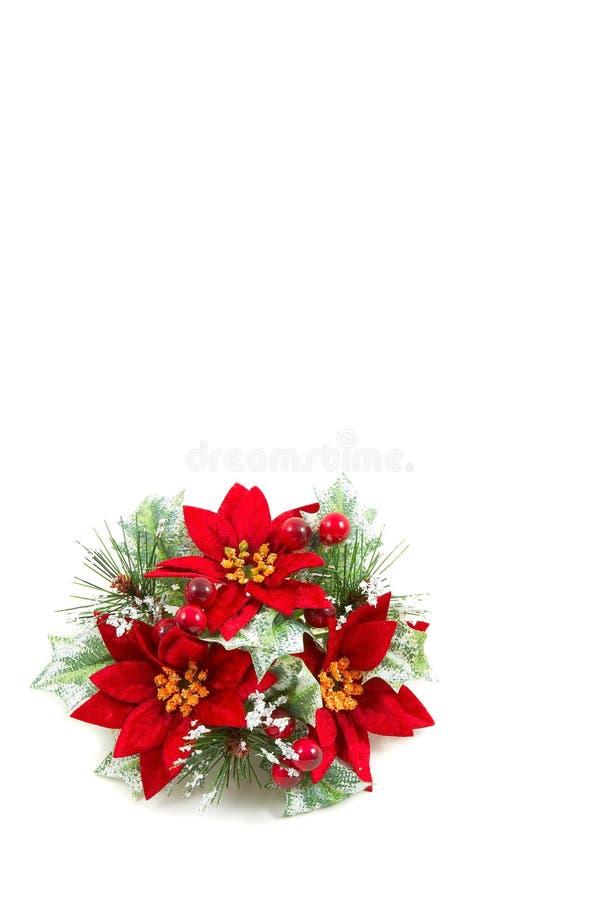 圣诞节花一品红花圈 免版税库存图片