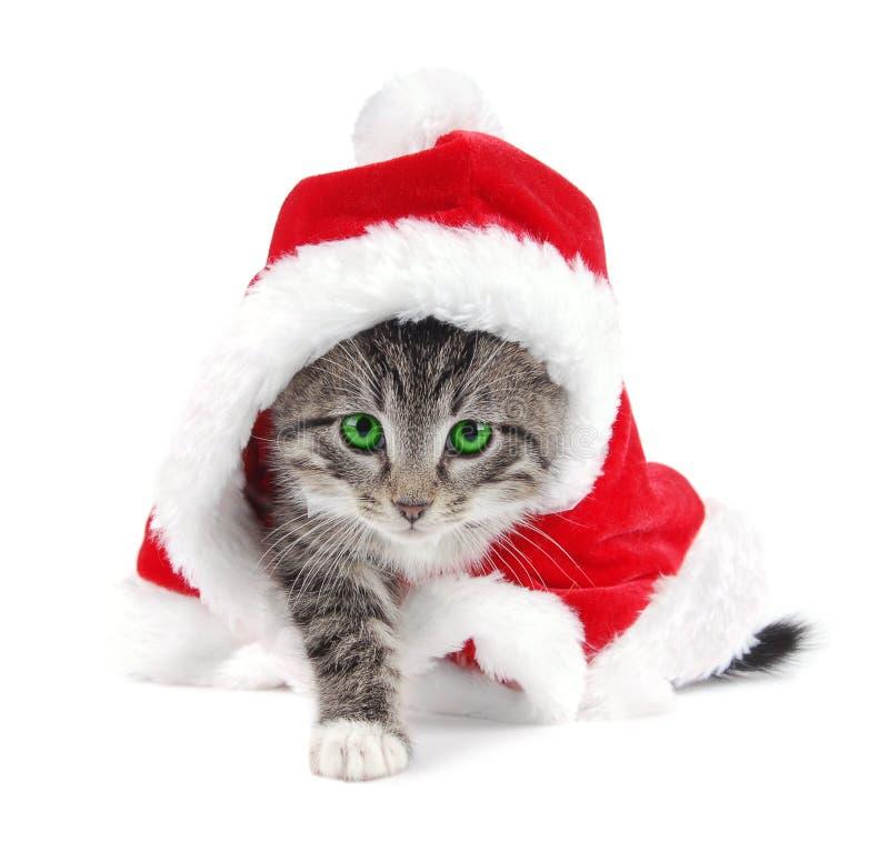 圣诞节被注视的绿色小猫成套装备平&# 库存图片