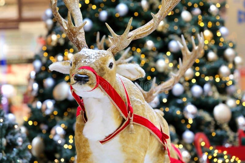圣诞节装饰-反对圣诞树的驯鹿 库存图片