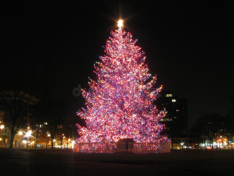 圣诞节避风港新的结构树 免版税库存图片