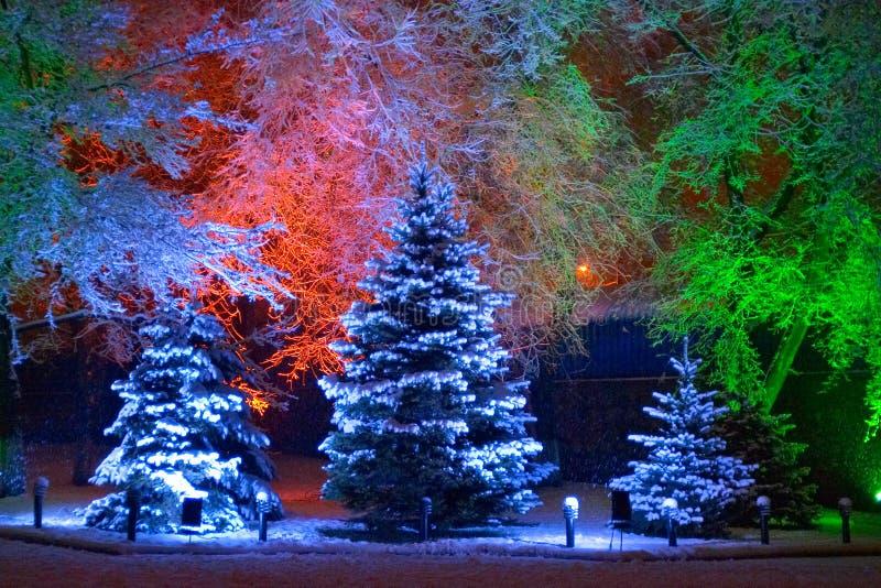 圣诞节魔术结构树 免版税库存图片