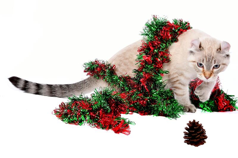 圣诞高原林猫5 库存图片