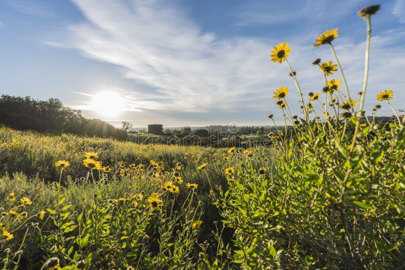 圣费尔南多谷野花草甸在洛杉矶加利福尼亚 库存照片
