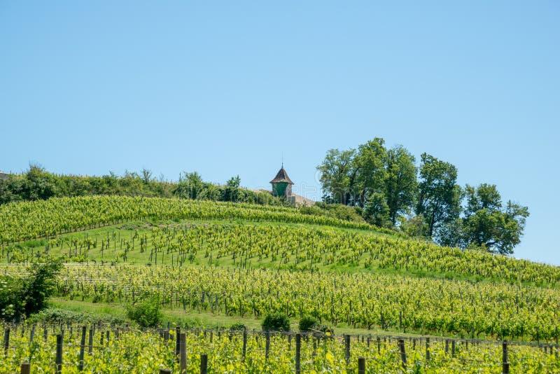 圣Emilion,吉伦特省,法国 在村庄附近的葡萄园 图库摄影