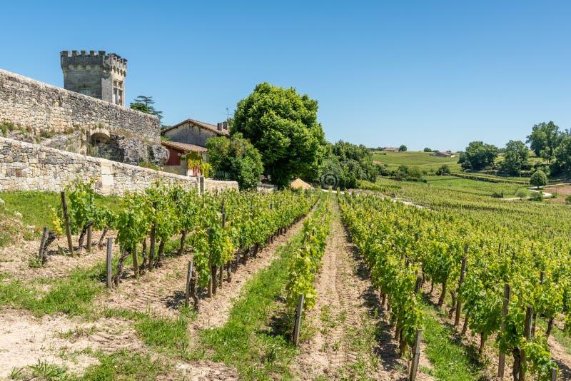 圣Emilion,吉伦特省,法国 在村庄附近的葡萄园 免版税库存图片