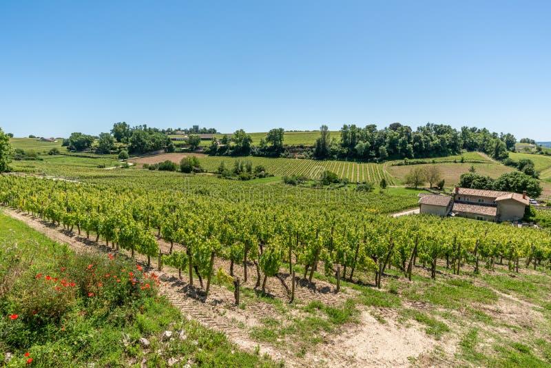 圣Emilion,吉伦特省,法国 在村庄附近的葡萄园 免版税库存照片