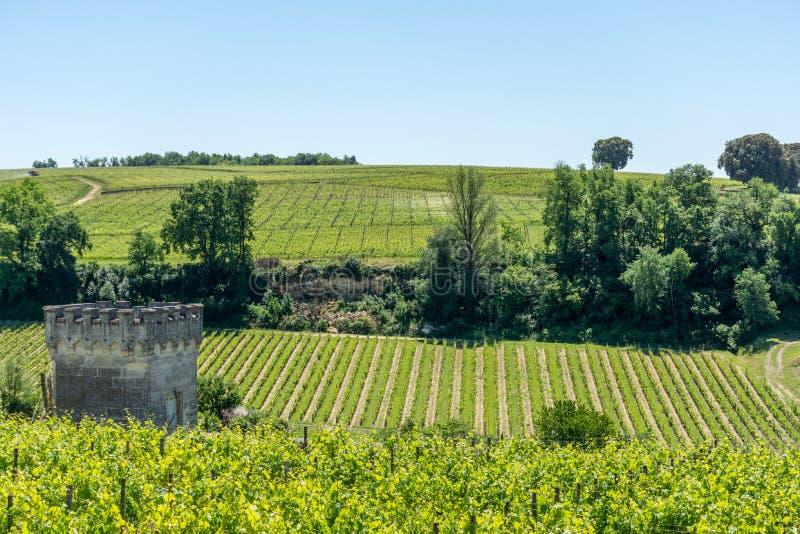 圣Emilion,在吉伦特省,法国:在中世纪村庄附近的葡萄园 免版税库存图片