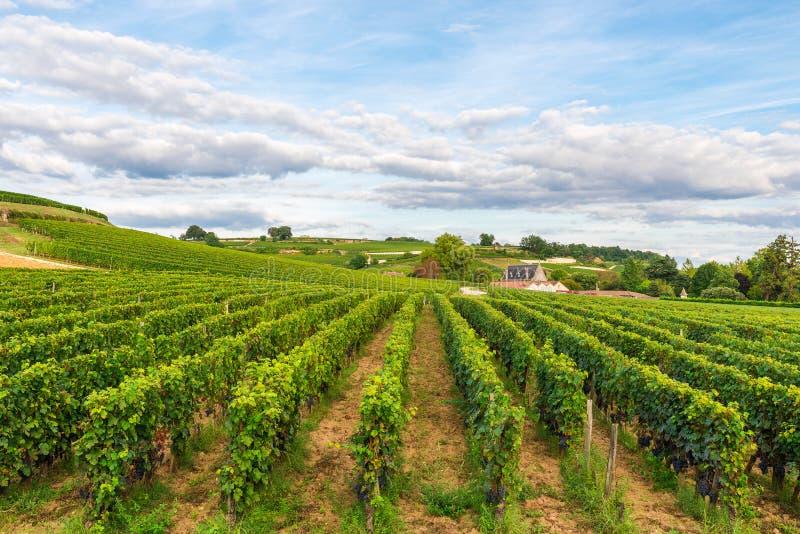 圣Emilion,红葡萄酒Wineyards葡萄园在法国 免版税库存照片