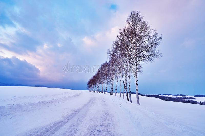 在'七星附近的美丽的松树没有ki'沿补缀品路在美瑛町市的冬天 免版税库存图片